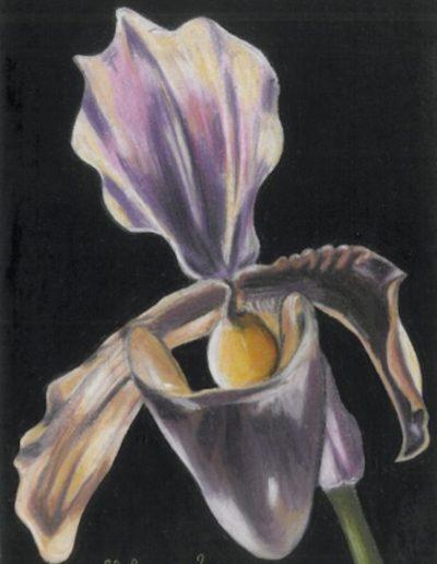 jennati-art-orchid