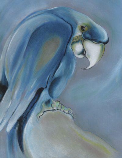 jennati-art-parrot